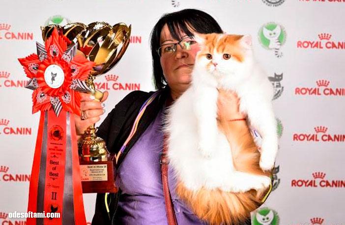 Выставки кошек, автомобилей и другое - odesoftami.com