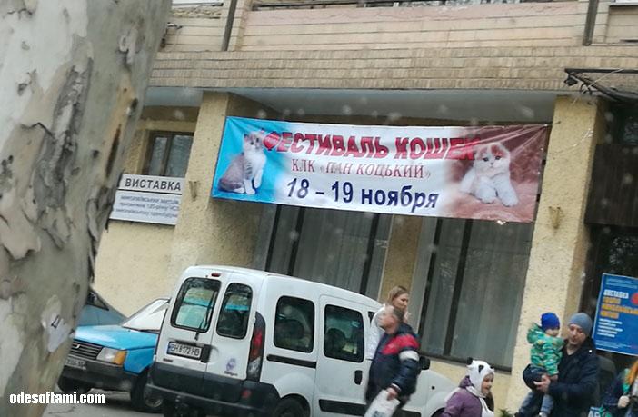 Выставка кошек Николаеве