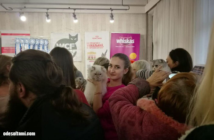 Фестиваль кошек в городе Николаеве