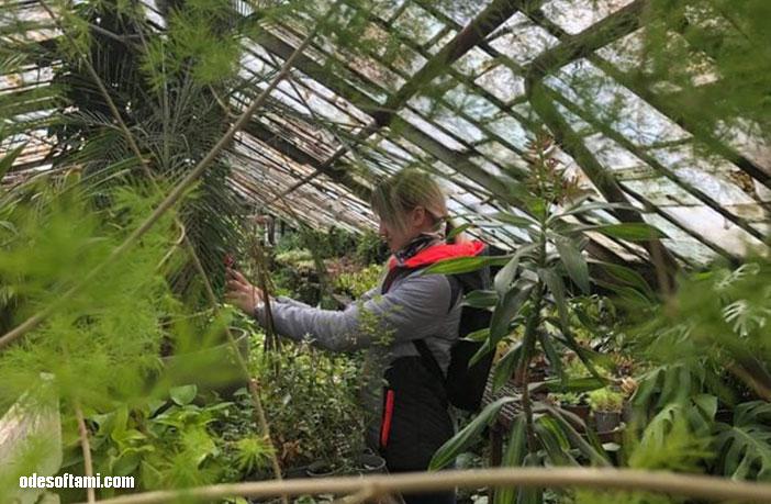 Инна Доша. Одесский ботанический сад, Одесса. Теплицы - odesoftami.com