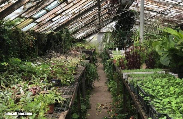 Одесский ботанический сад, Одесса. Теплицы - odesoftami.com