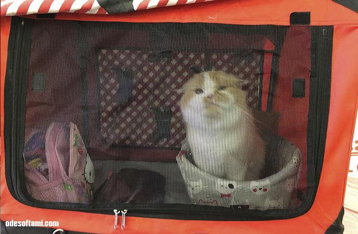 Международная   выставка кошек в Одесса