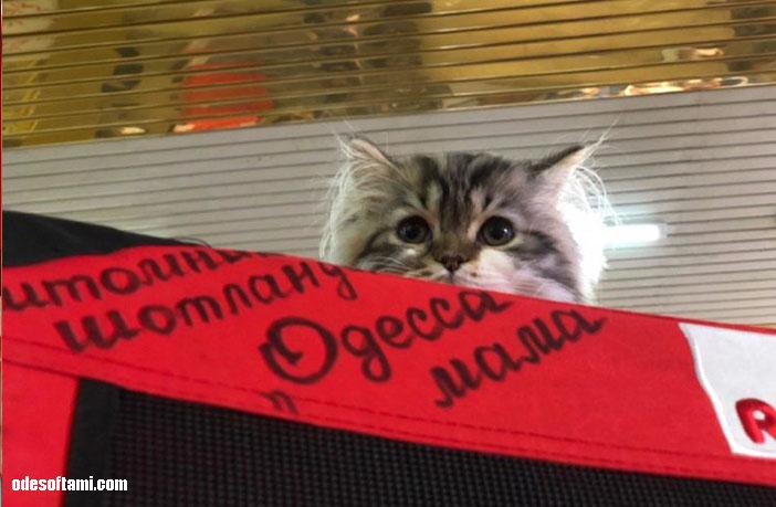 Выставка кошек в Одесса