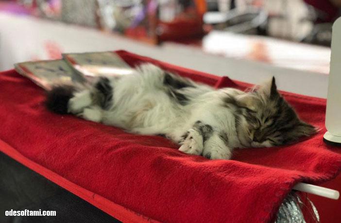 Кошачья выставка в Одессе