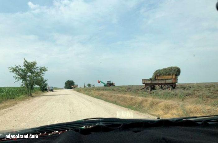 Молдова, Лавандовые поля - odesoftami.com