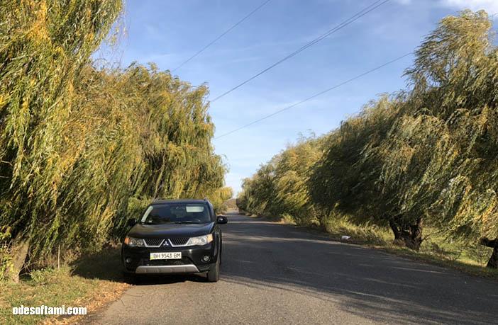 Ивушки в селе Мирное, Одесская область
