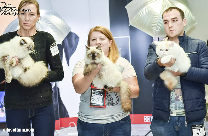 Nica Cat Festival от КЛУБА ЛЕГЕНДА