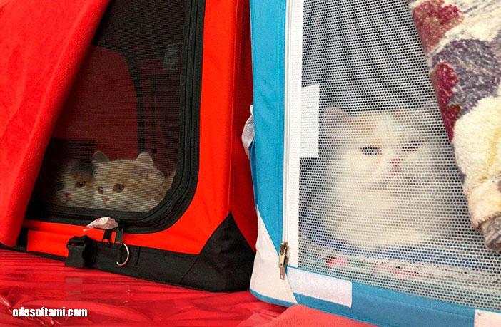 Выставка кошек на Морском вокзале - выставочный зал