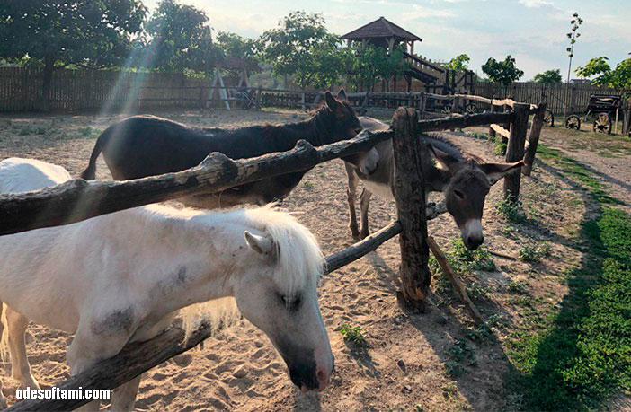 Лошади на Ранчо дядюшка Бо. Одесская область - odesoftami.com