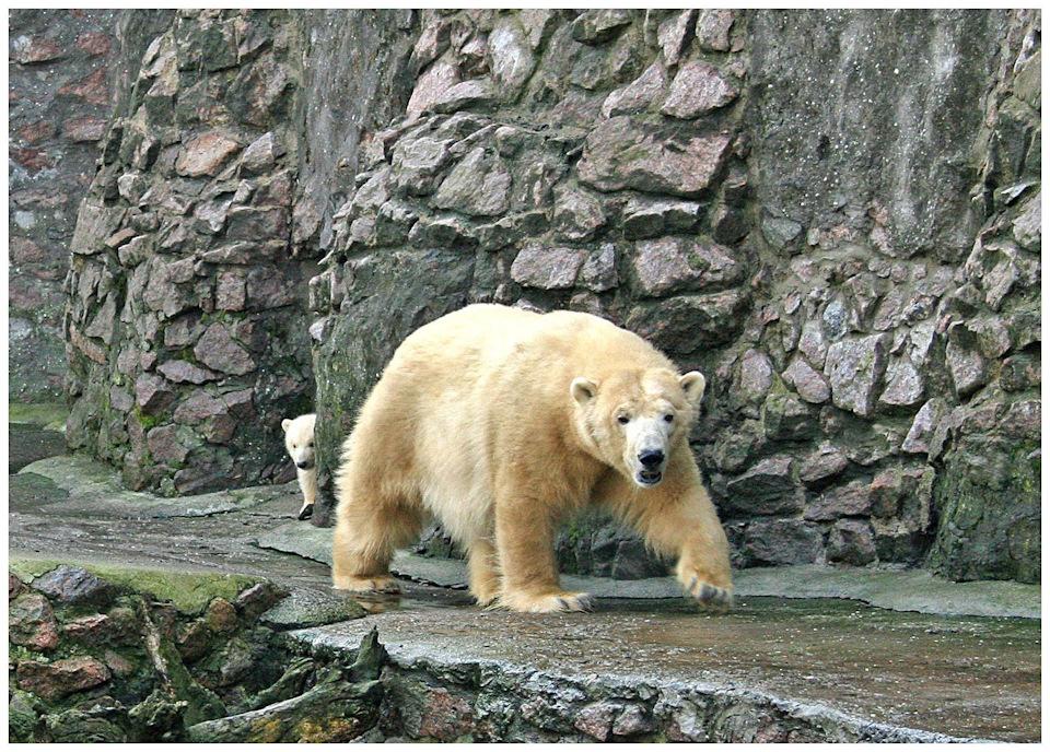 Медвежонок в Николаевском зоопарке