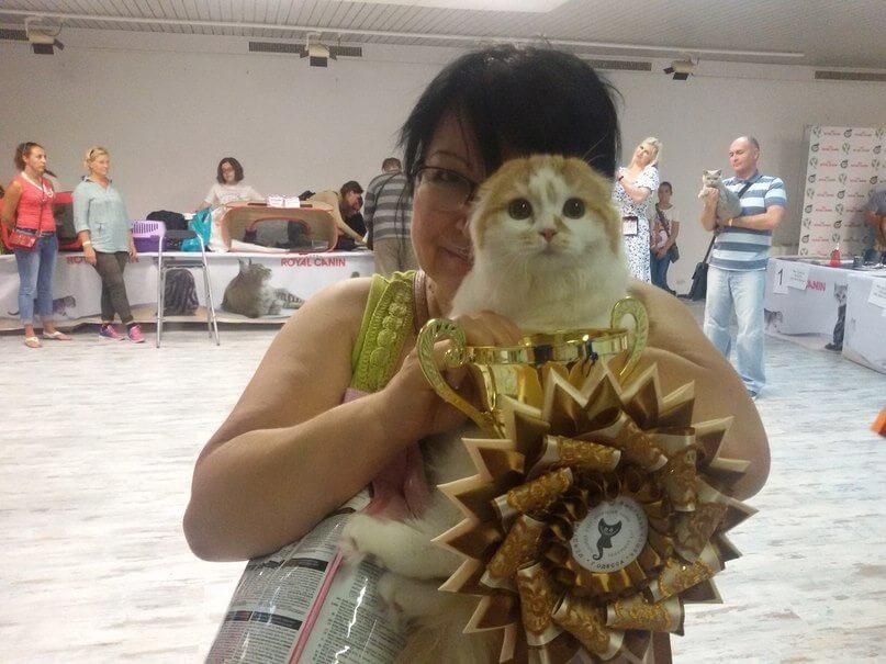 Выставка WCF котиков… 12-13 сентября…
