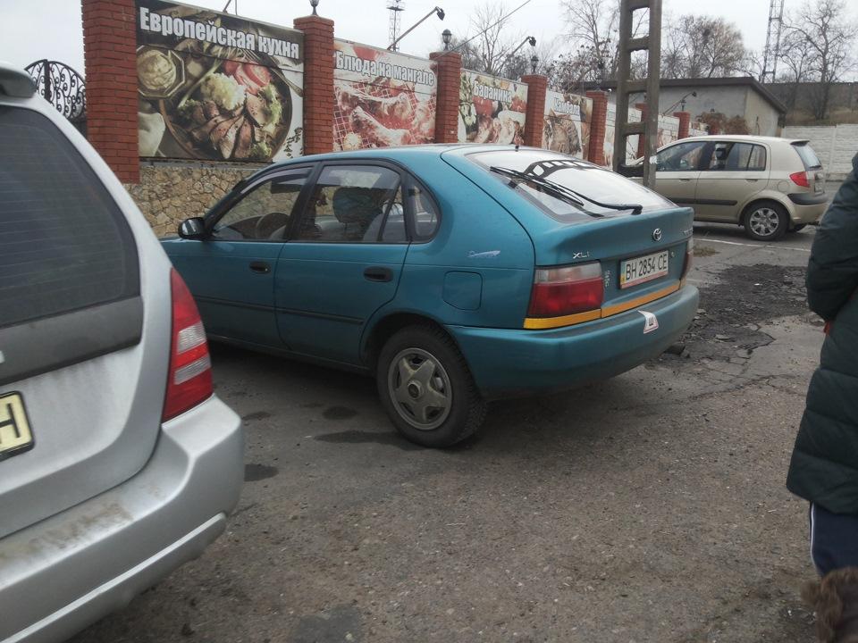 В погоне за переноской для котэ… Или снова лебеди в Одессе))