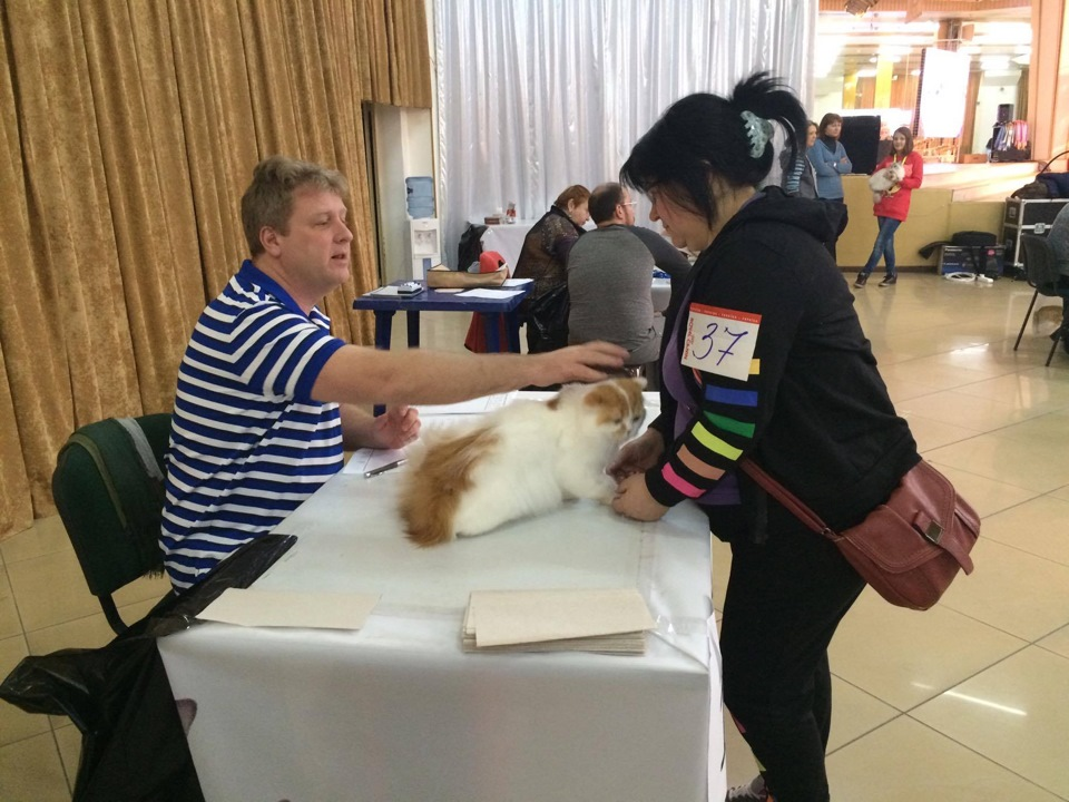 19-20 марта 2015. Побывали на WCF выставке кошек на Морскомвокзале г.Одесса