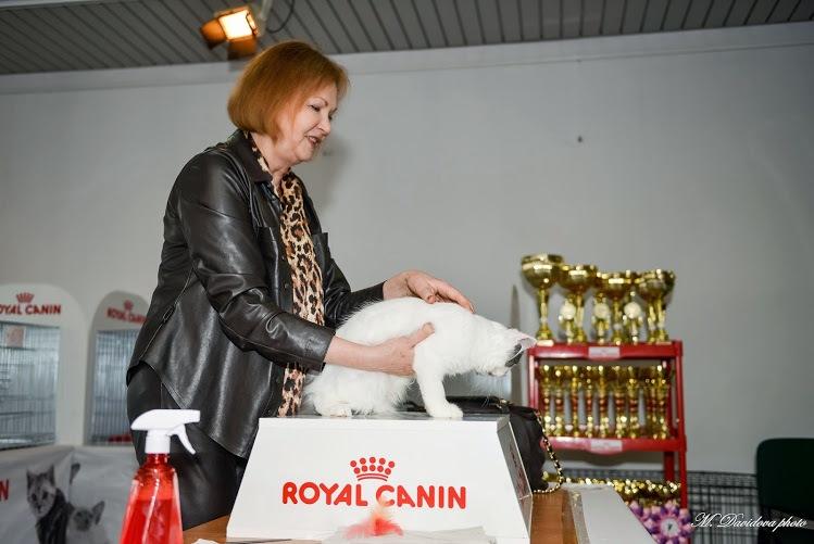 Морвокзал…Выставка… Котики… 15 марта 2015