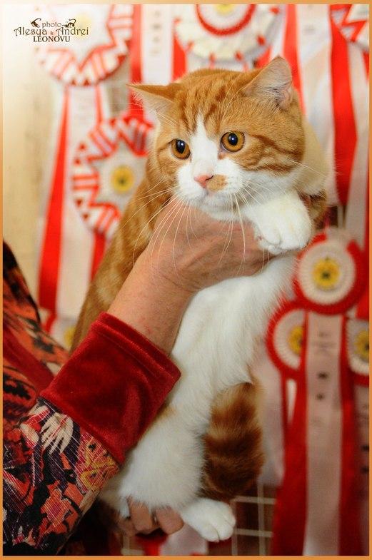 Выставка WCF кошек в г.Николаев. 15-16 марта 2014