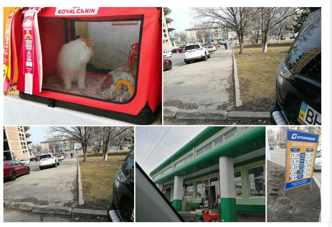 Поездка в Молдову на WCF выставку кошек Солнце в Бокале 3