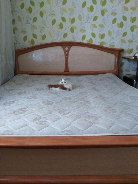 Продам кровать 200х220 + матрас + ламелии (big size)