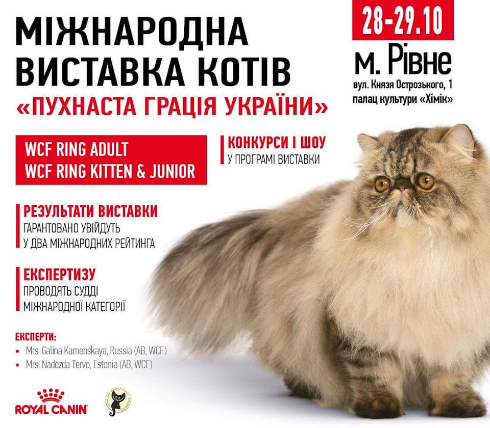 """Международная выставка кошек """"Пухнаста грацiя"""" в г.Ровно"""