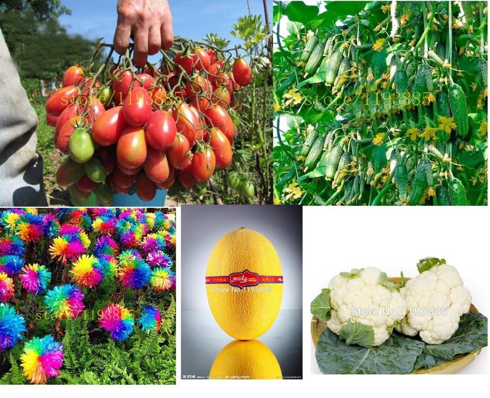 Хорошие семена – залог экологически чистых продуктов